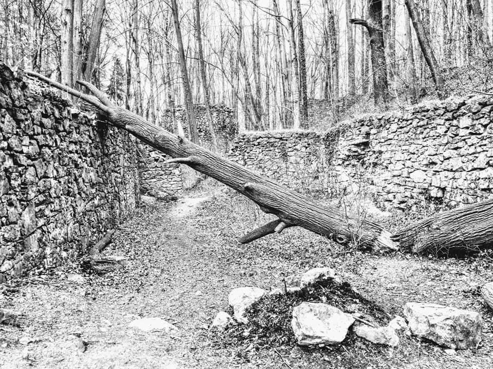 Czarno-białe zdjęcie połamanego drzewa