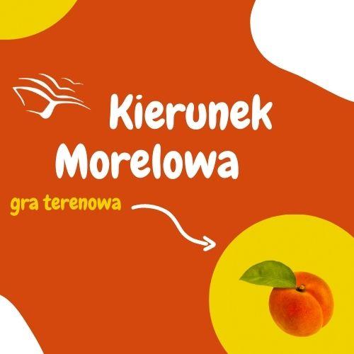 pomarańczowa grafika z napisem kierunek morelowa
